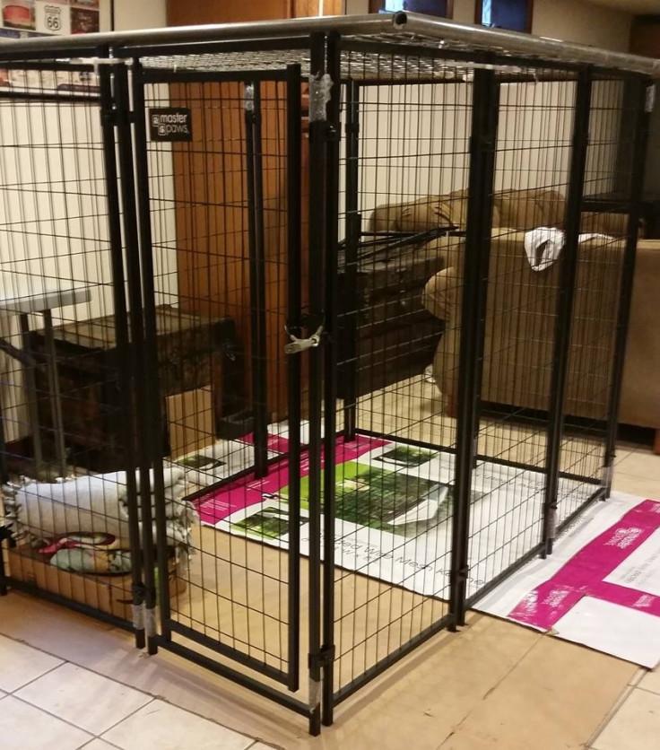 Granddaughter dog kennel cage