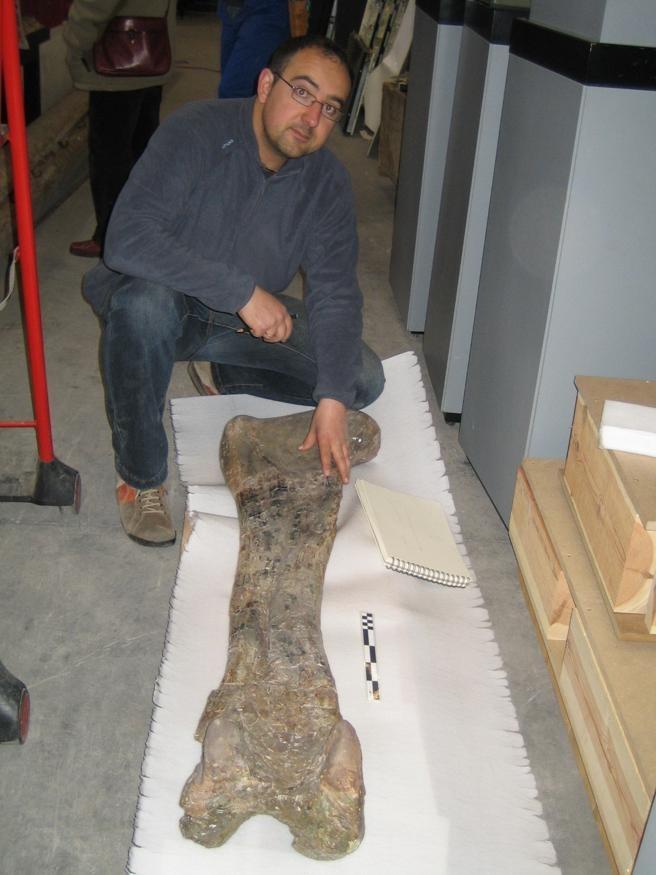 Palaeontologist Rafael Royo examines a Soriatitan golmayensis femur. (Photo: Rafael Royo/Dinopolis)