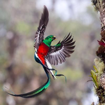 Wildlife Photographer of the Year 2017
