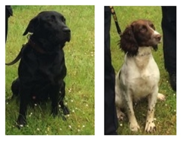 The first police sniffer dogs Rob (l) and Tweed trained to help police detect hidden digital storage devices paedophiles, terrorists and fraudsters were unveiled in the UK