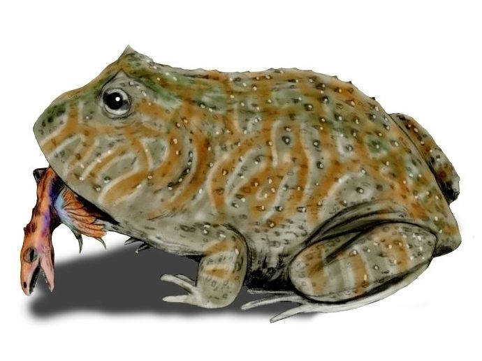 'Giant dinosaur-eating frog species identified'
