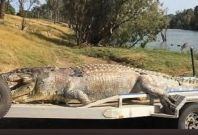 5.2metre crocodile shot dead