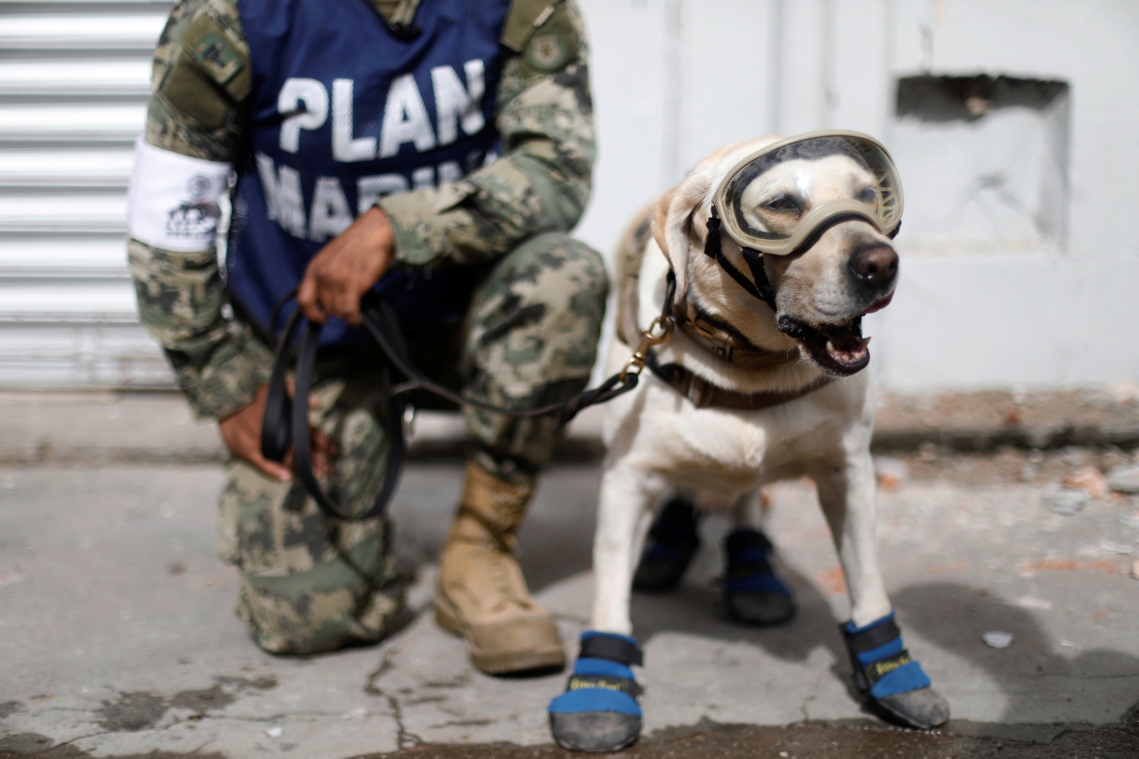 Heroic dogs are saving lives after the Mexico earthquake
