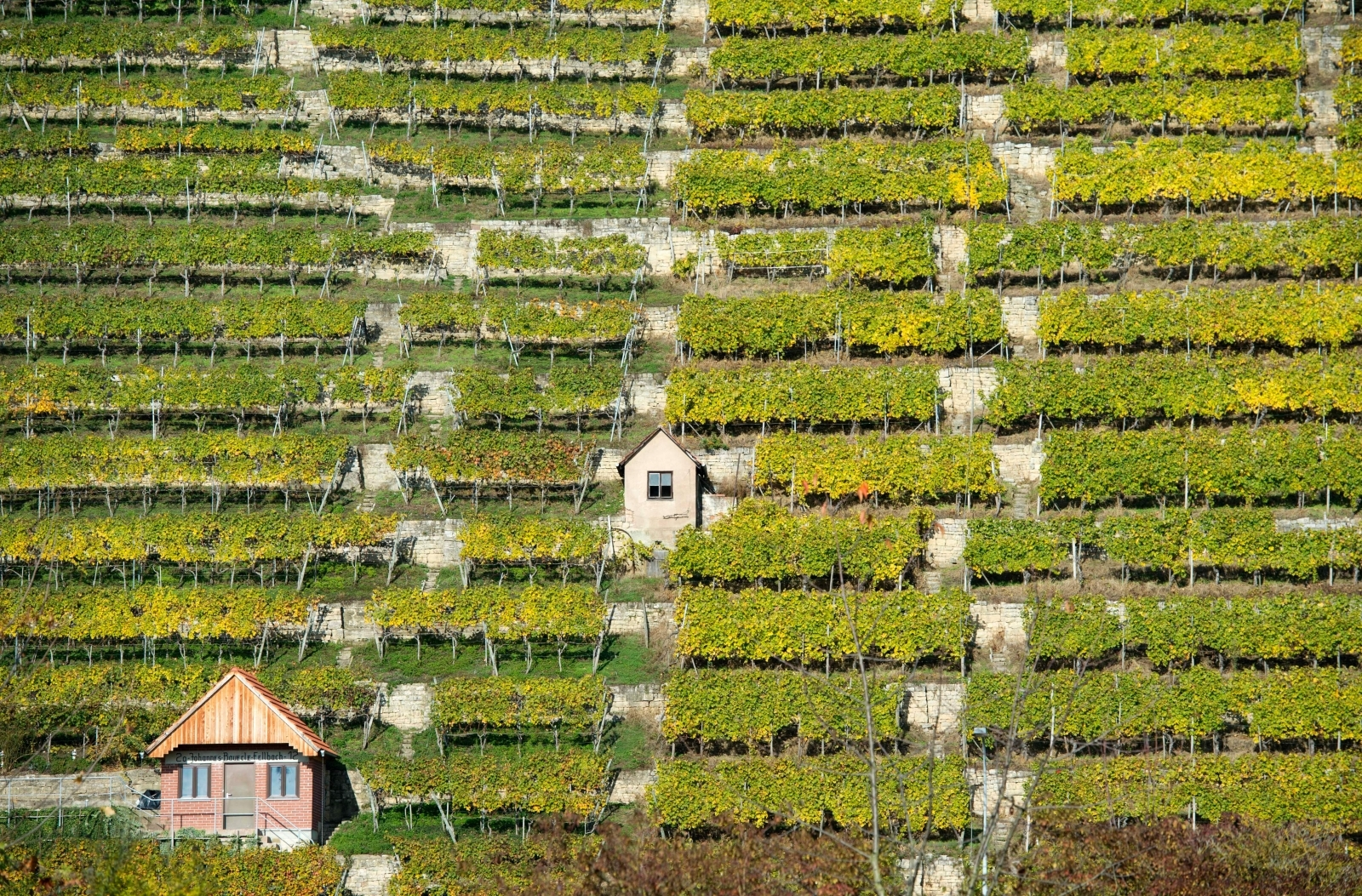 Stuttgart vineyard