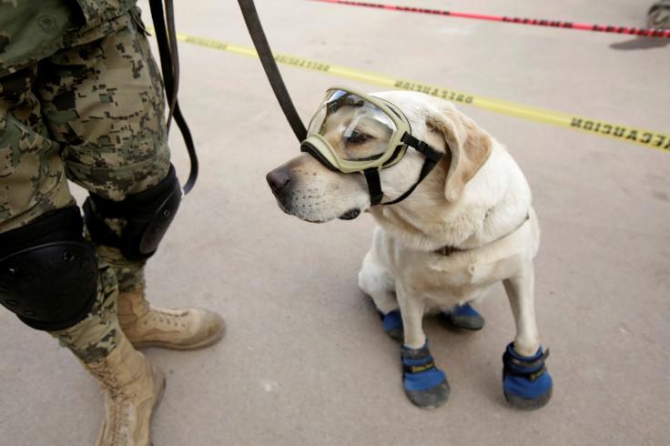 Mexico Earthquake rescue dog Frida