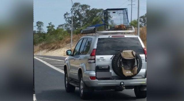 Puppy dog car roof RSPCA