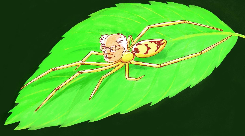Bernie Sanders spider