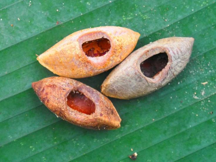 Solomon Island nuts