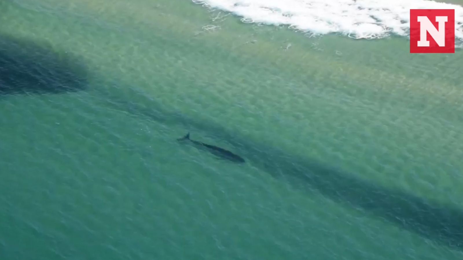 sharks-spotted-hunting-unusually-close-to-australian-beaches