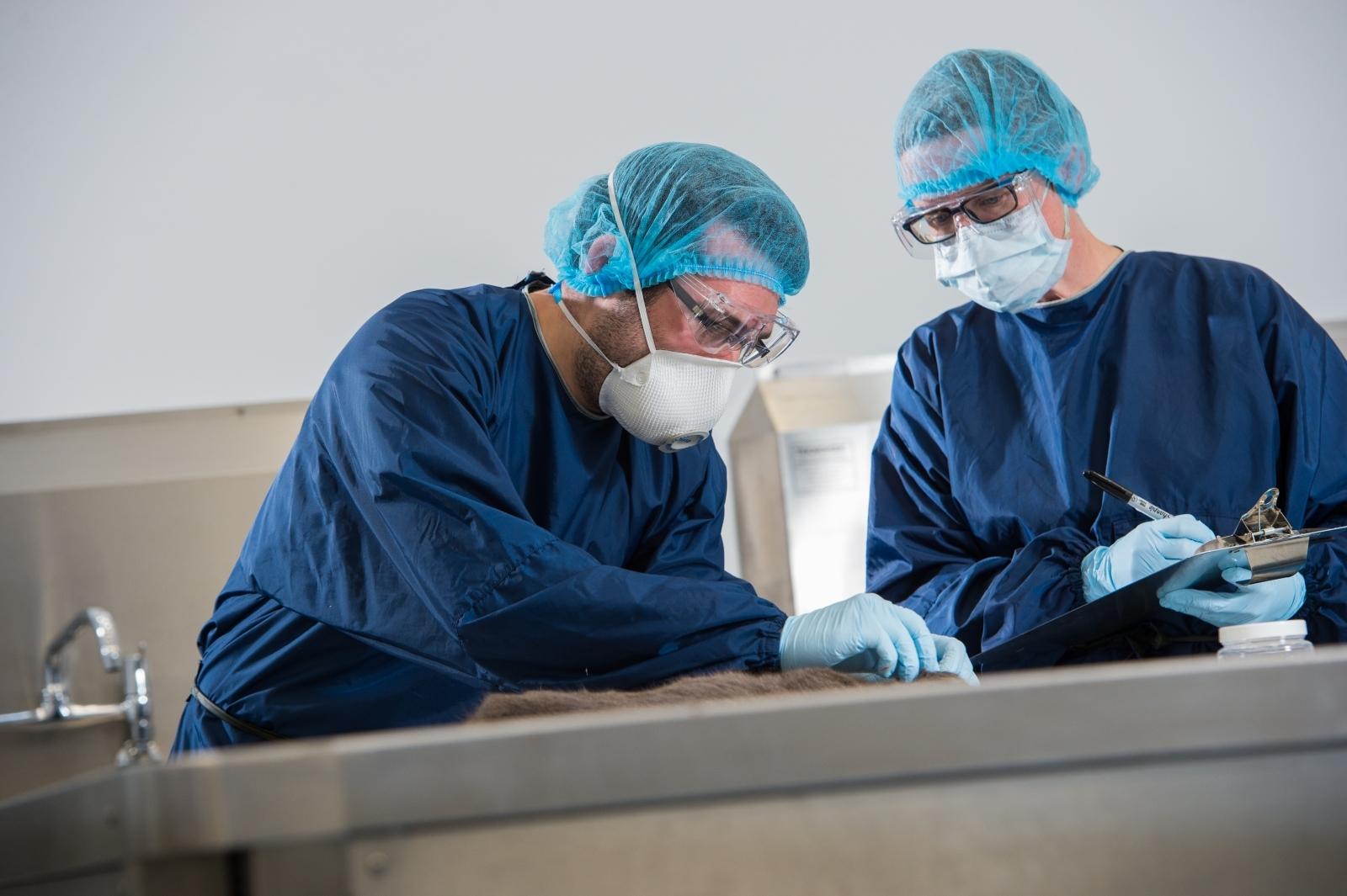 ArroGen Veterinary Forensics