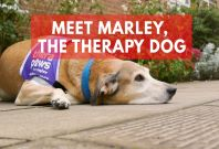 Marley therapy dog