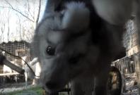 Fox abuse animal cruelty