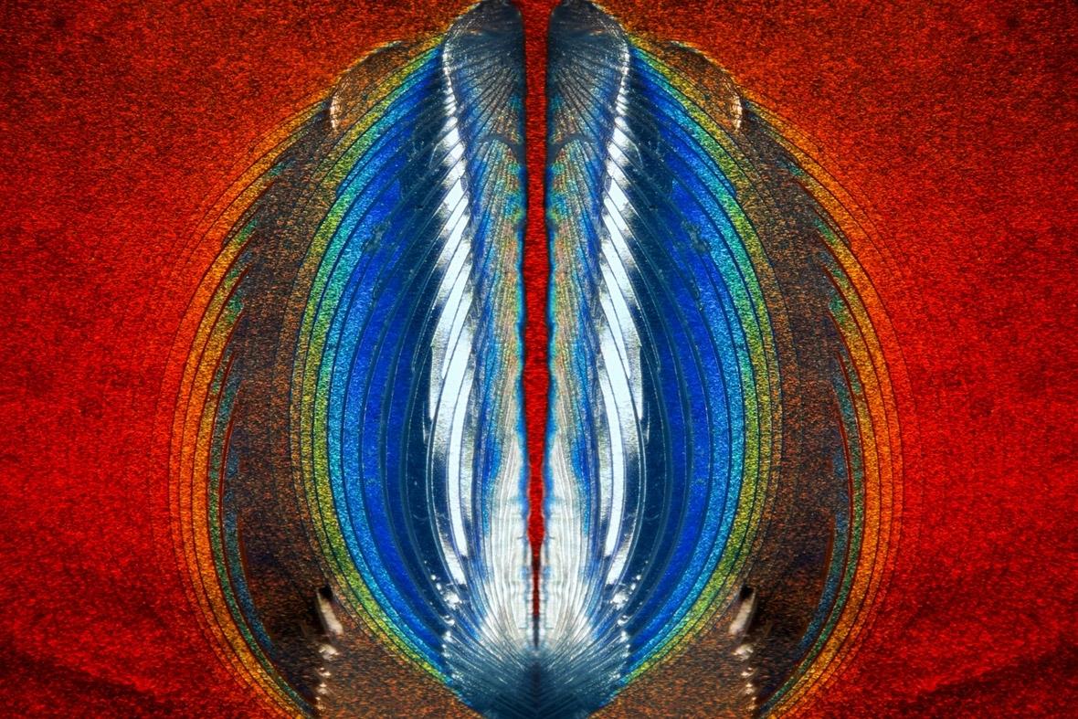 Стівен Саймон, Гранд Прері, Техас, США: ПЛАСТИЧНИЙ РОЗРИВ НА ГОЛОГРАМІ З КРЕДИТНОЇ КАРТКИ.
