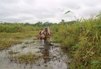 Amazon wild rice