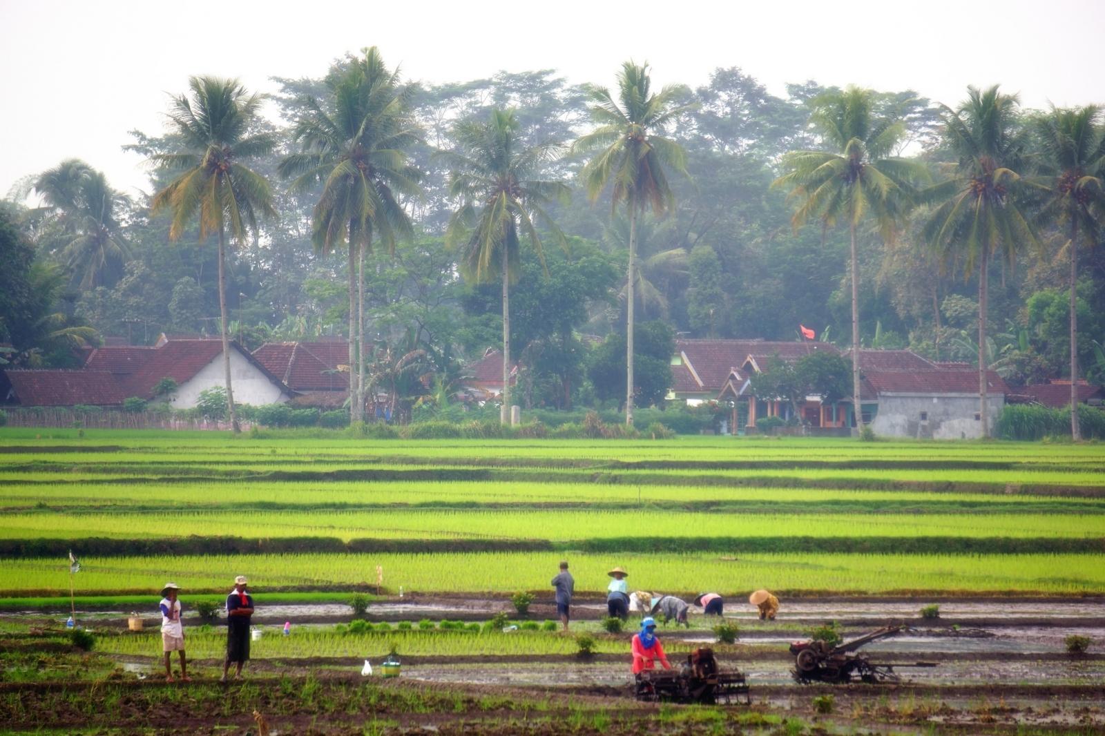 Indonesian farmers