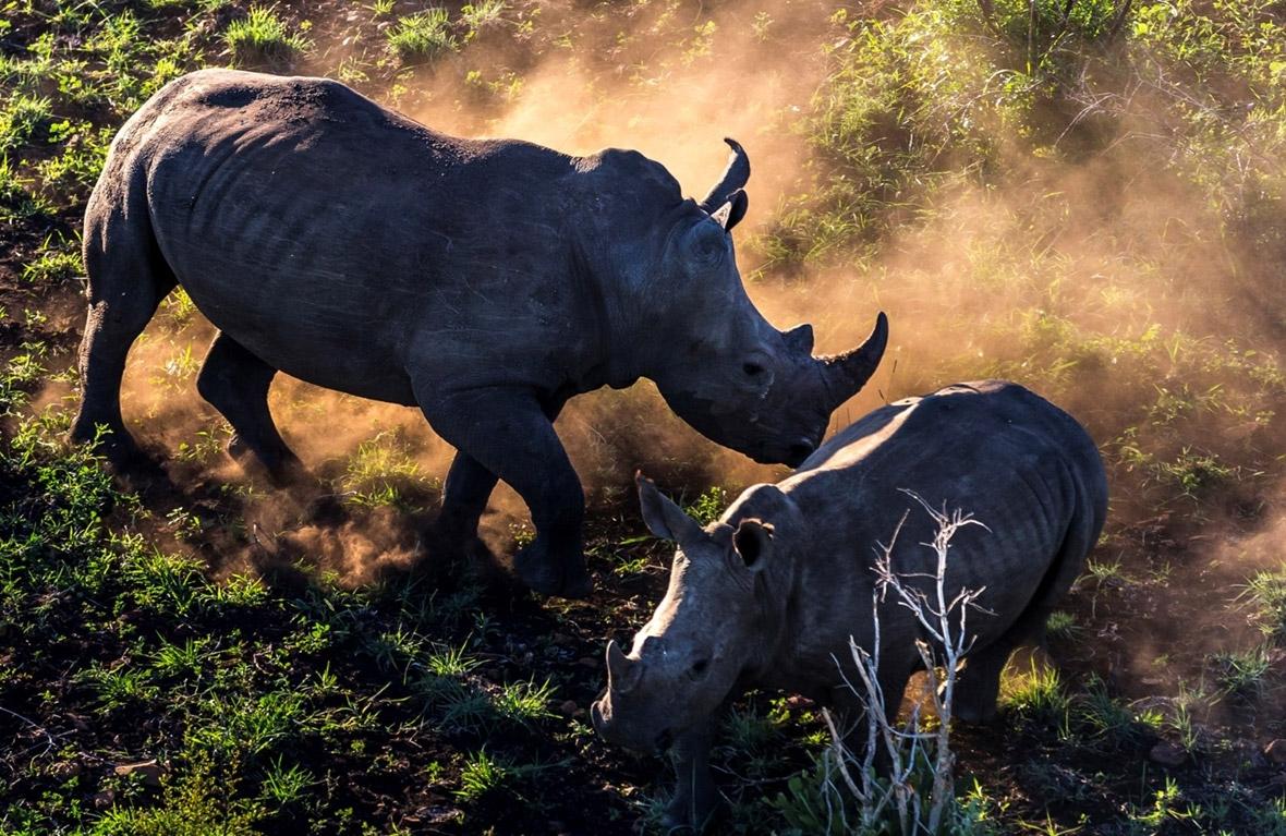 Brent Stirton trade in rhino horn