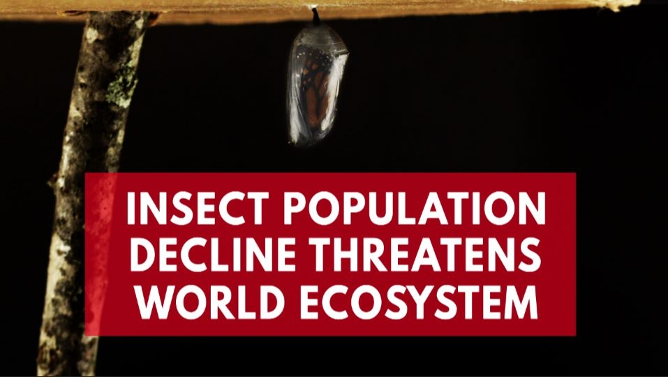 flying-insect-numbers-drop-threatening-world-ecosystem