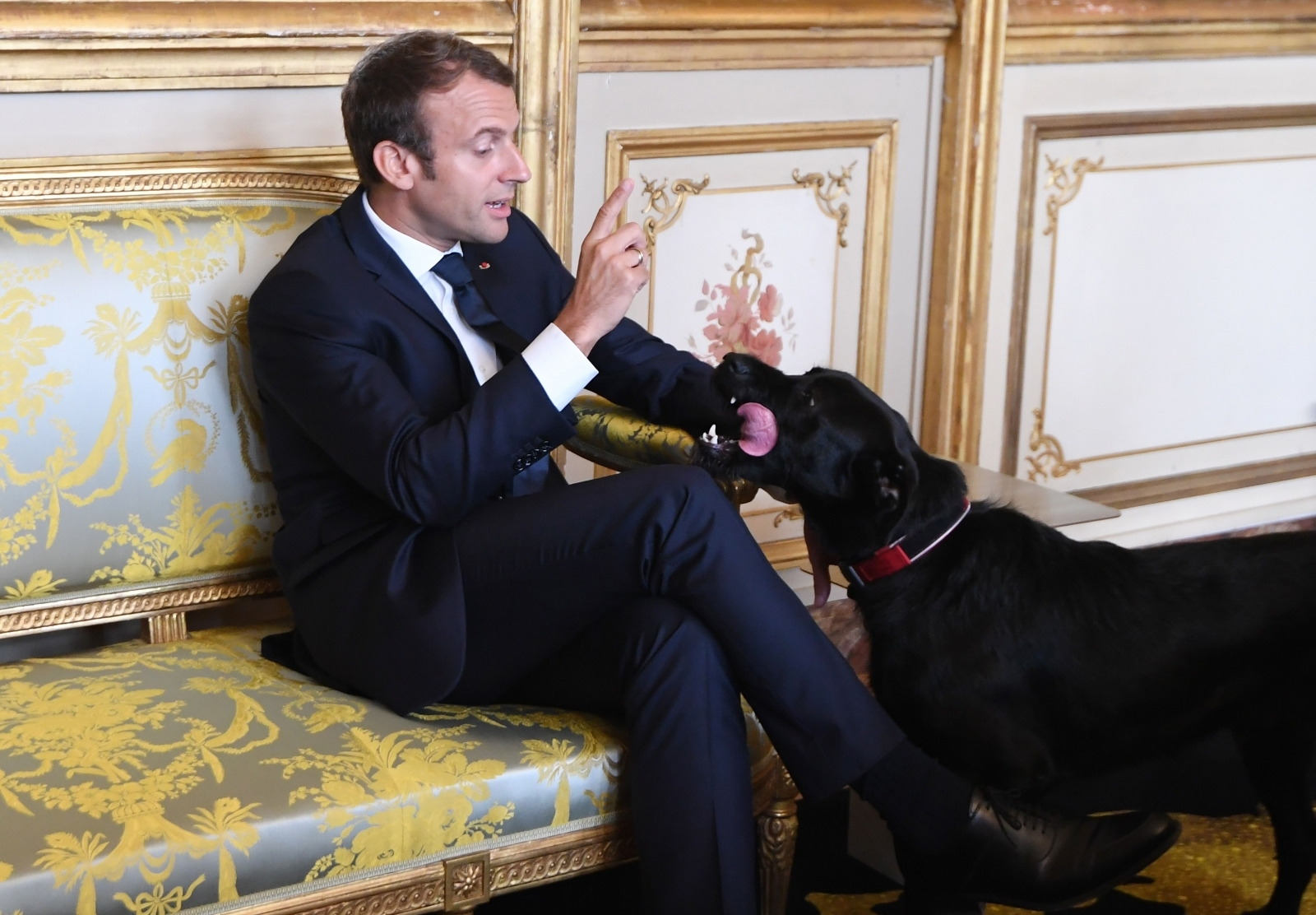 French President Emmanuel Macron's dog Nemo interrupts meeting to pee on fireplace