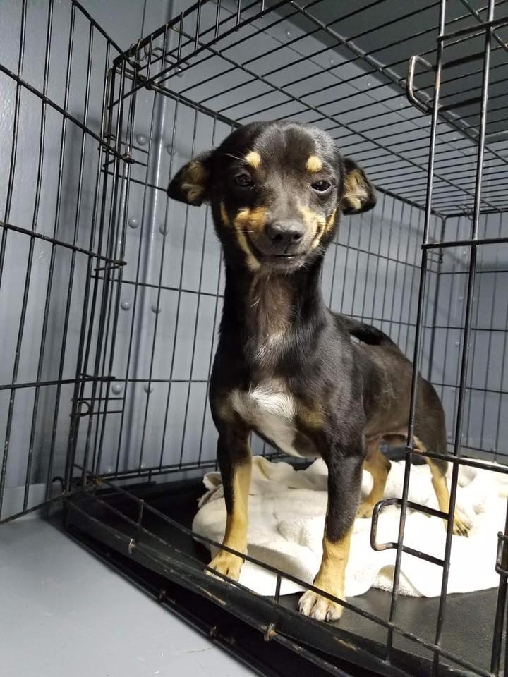 dog smiling shelter animal smile cheech animals viral texas applications pets puppy pet adopt him via posts
