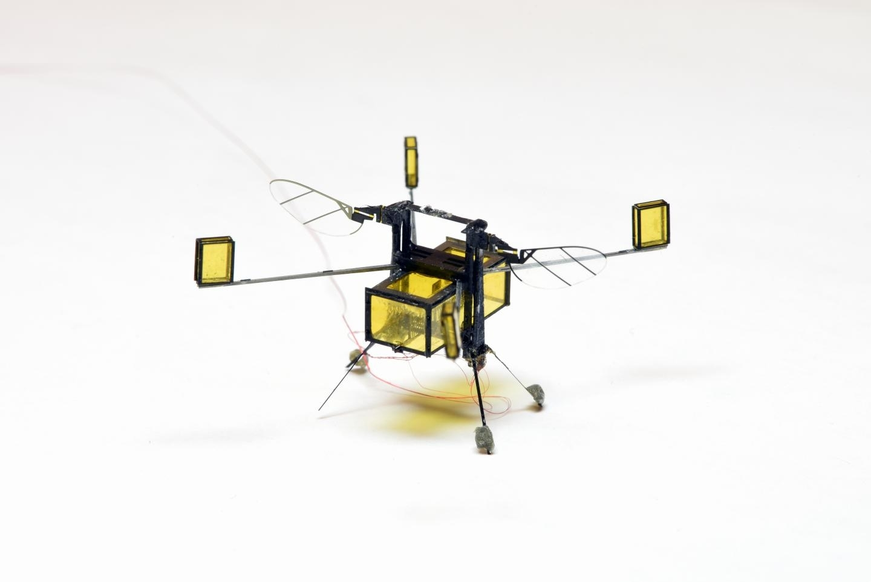 Hybrid RoboBee