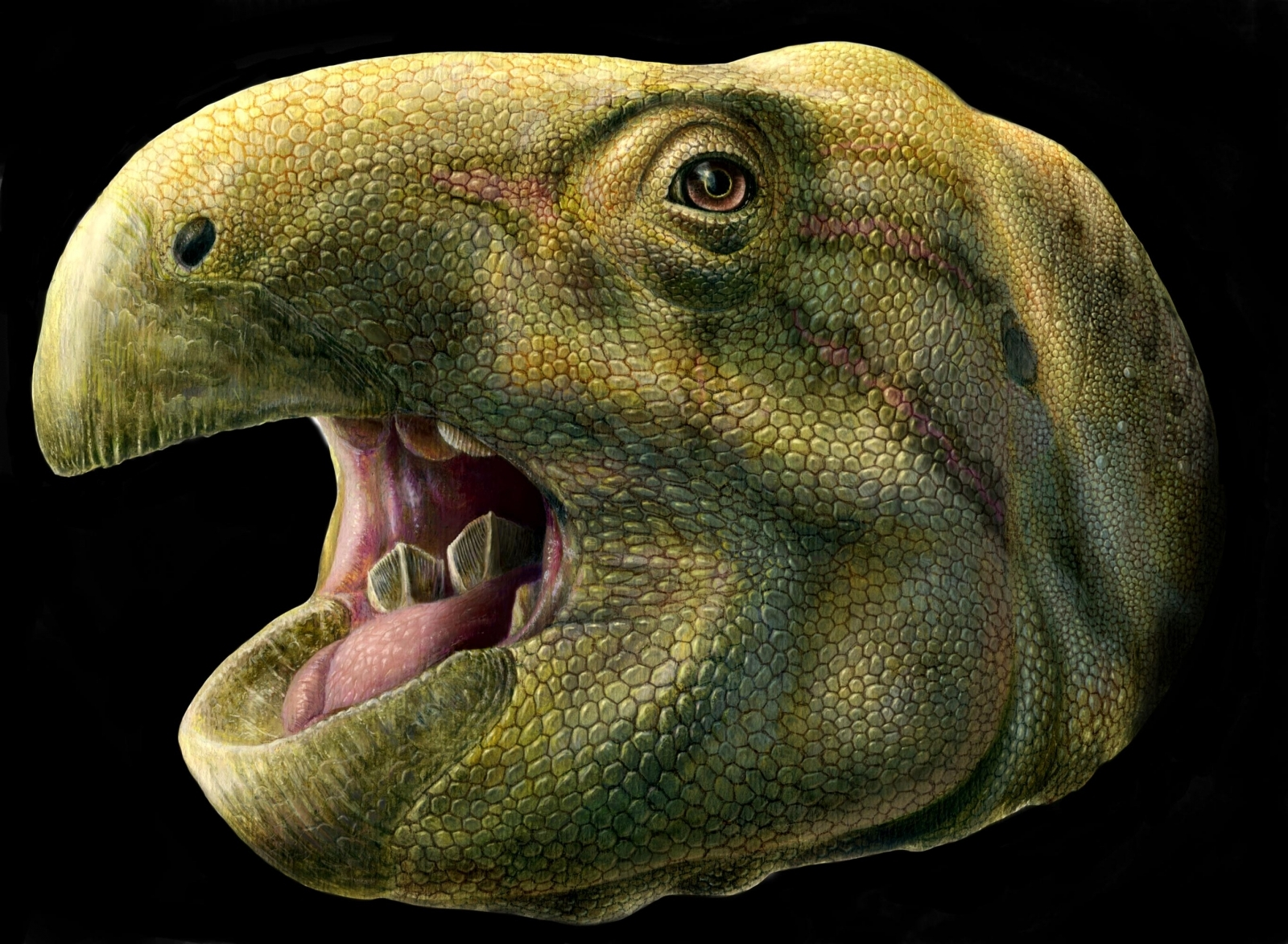 Dinosaur with scissor like teeth