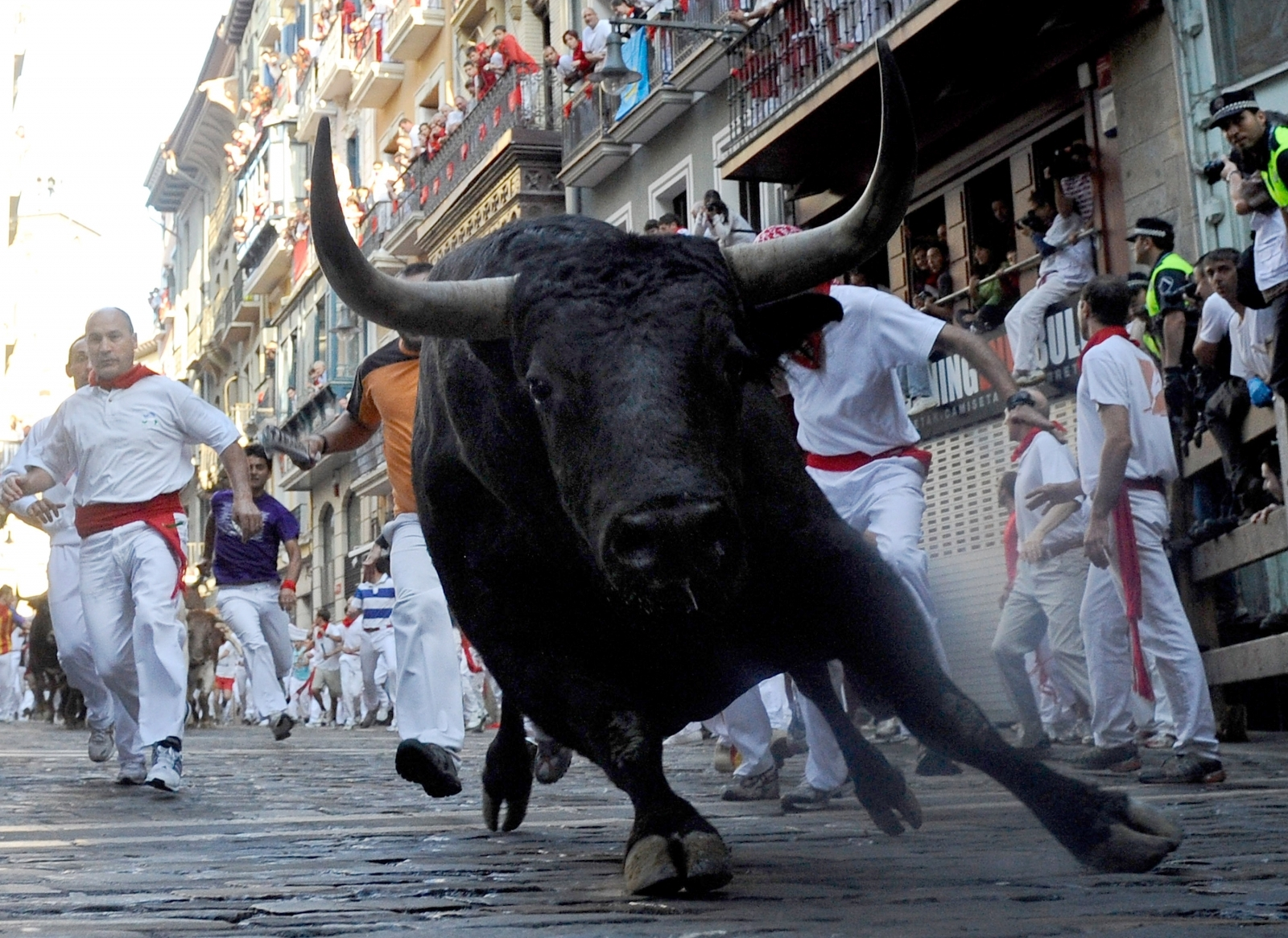 A bull running in Pamplona, Spain