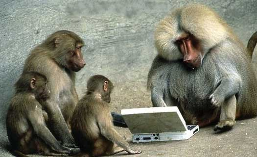 monkey computer laptop