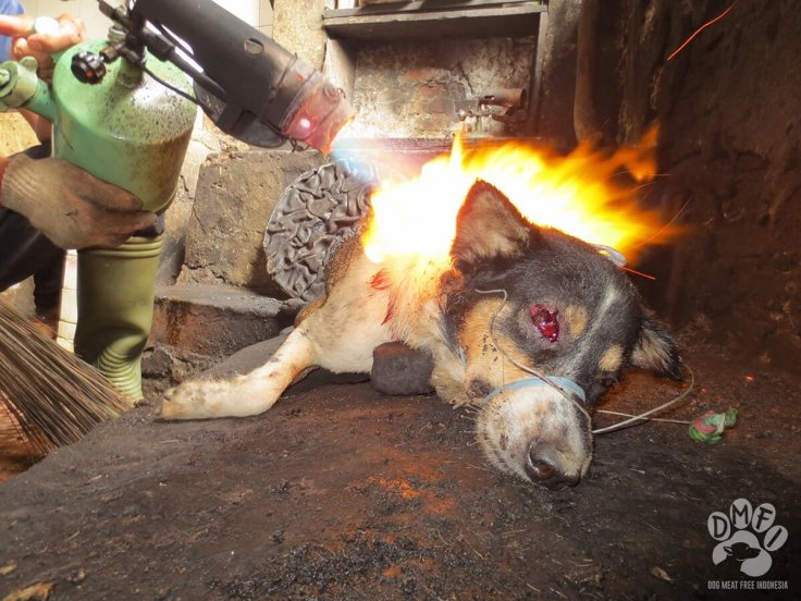 Indonesia dog meat