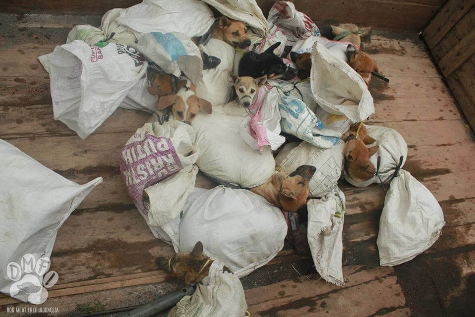 Dog meat indonesia