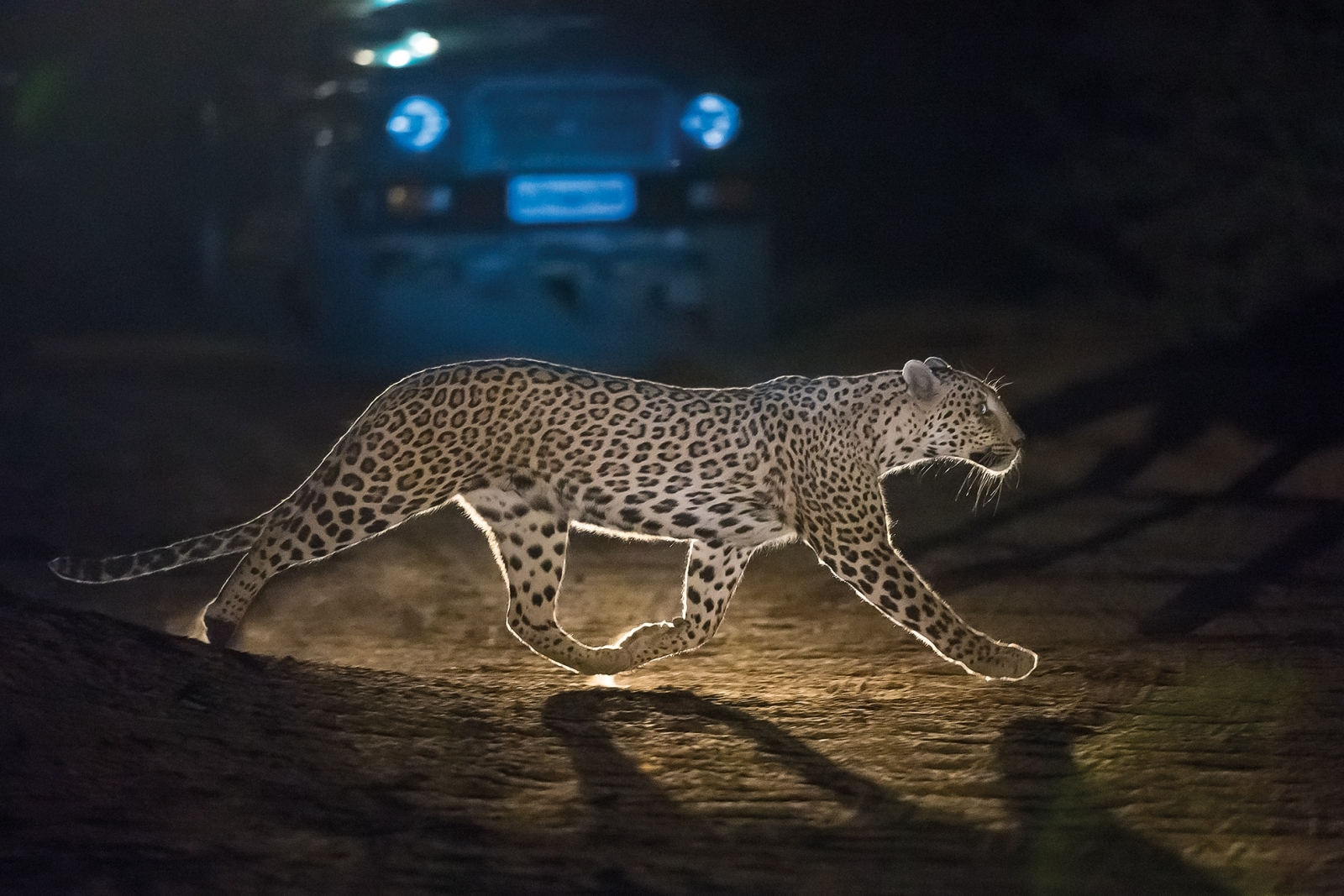Wild India in photos of the zoologist Axel Gomil