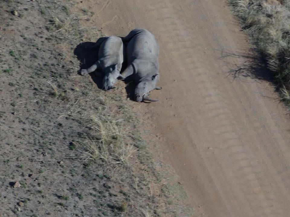 Rhino family killed by poachers
