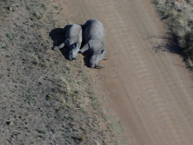 Rhino family killed by poachers