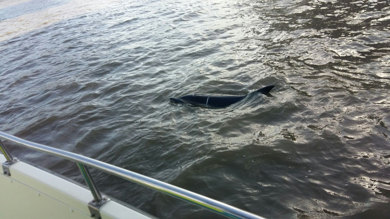 Dolphin Spotted in the Thames Found Dead