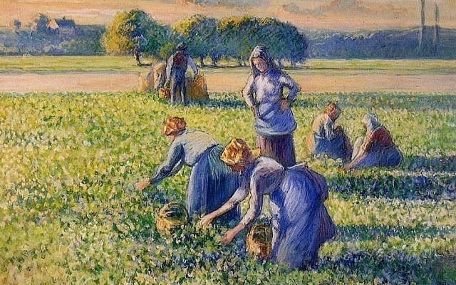 Camille Pissarro's 'La Cueillette des Pois' (Picking Peas) which a French court has ordered returned to the Jewish family from which it was taken during World War II