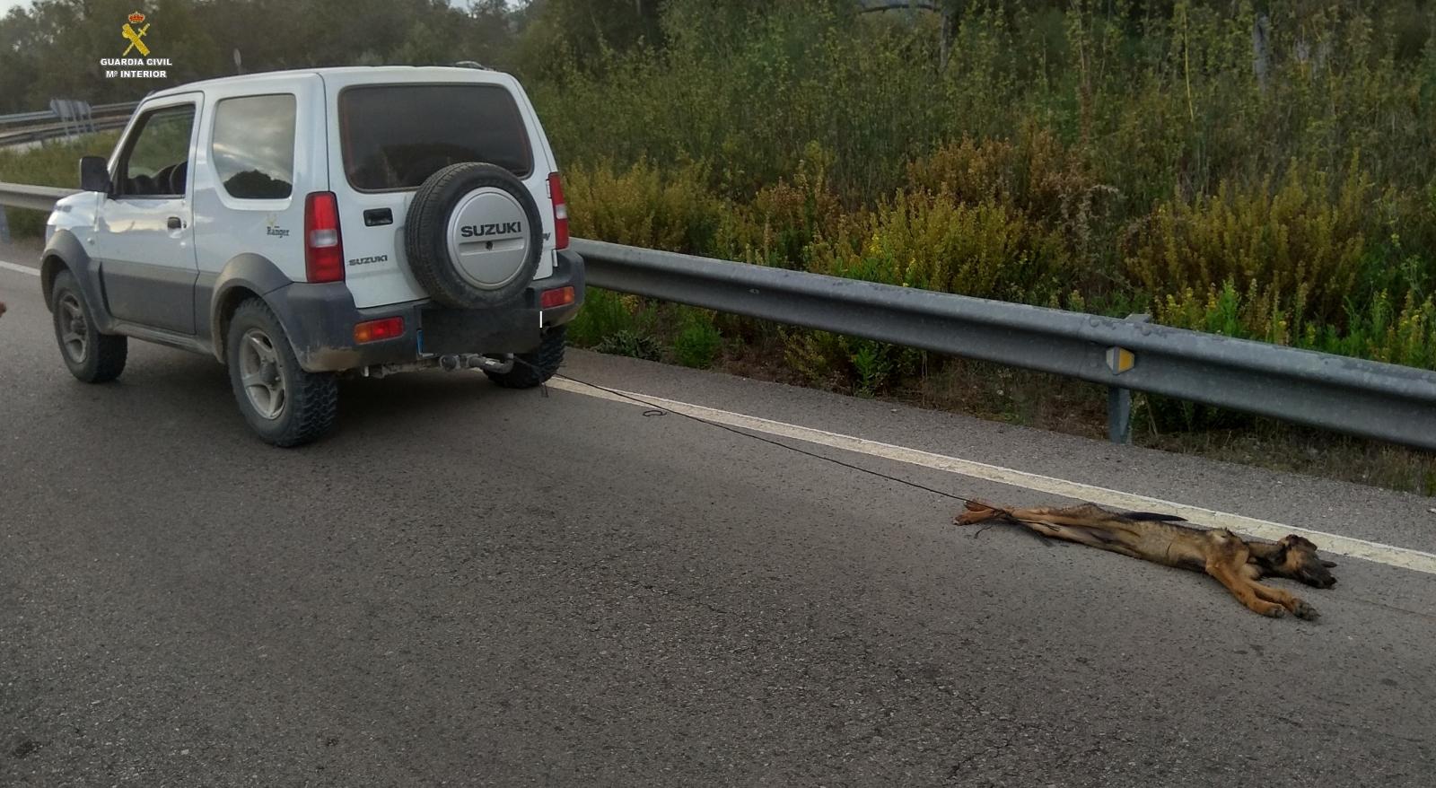 Dog dragged by car