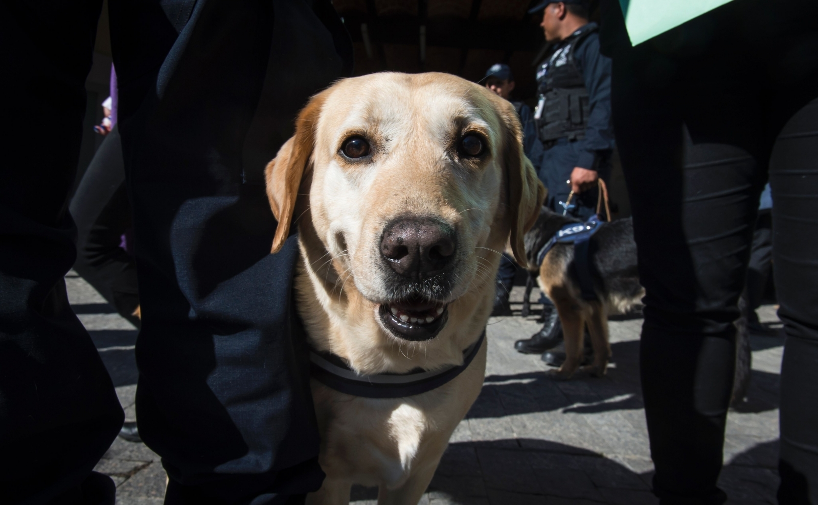 Mexican police dog