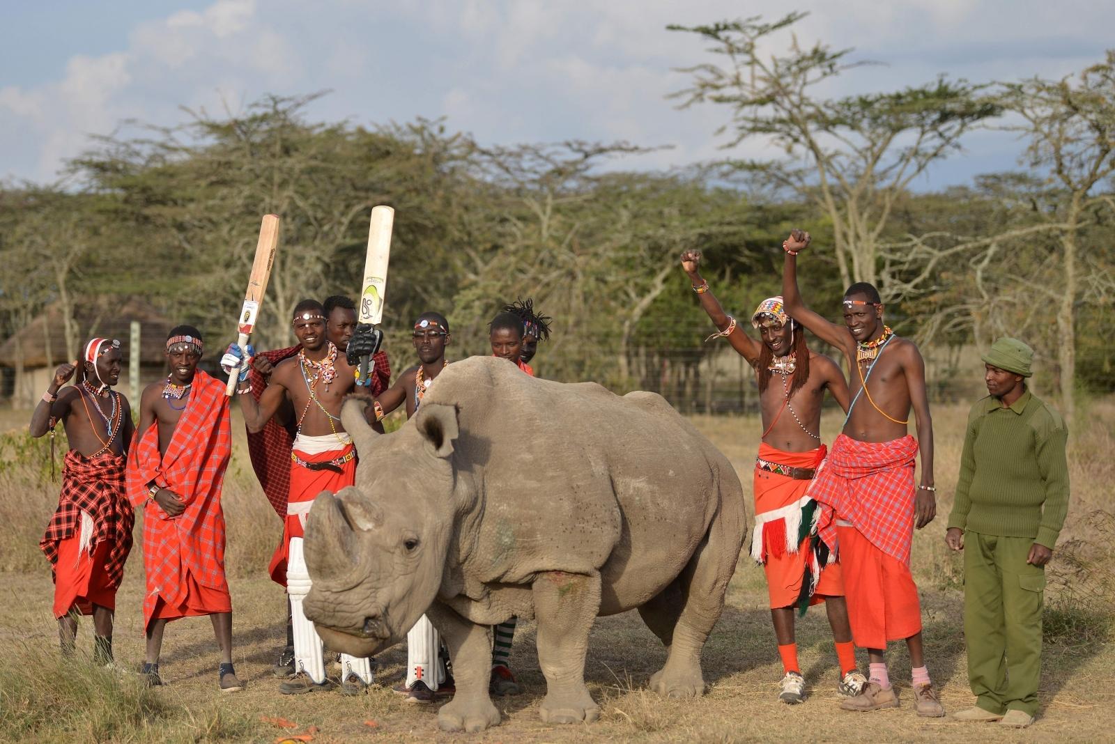 Endangered rhino with Maasai warriors in Kenya