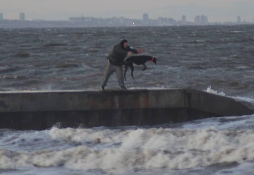 Man throws greyhound into sea
