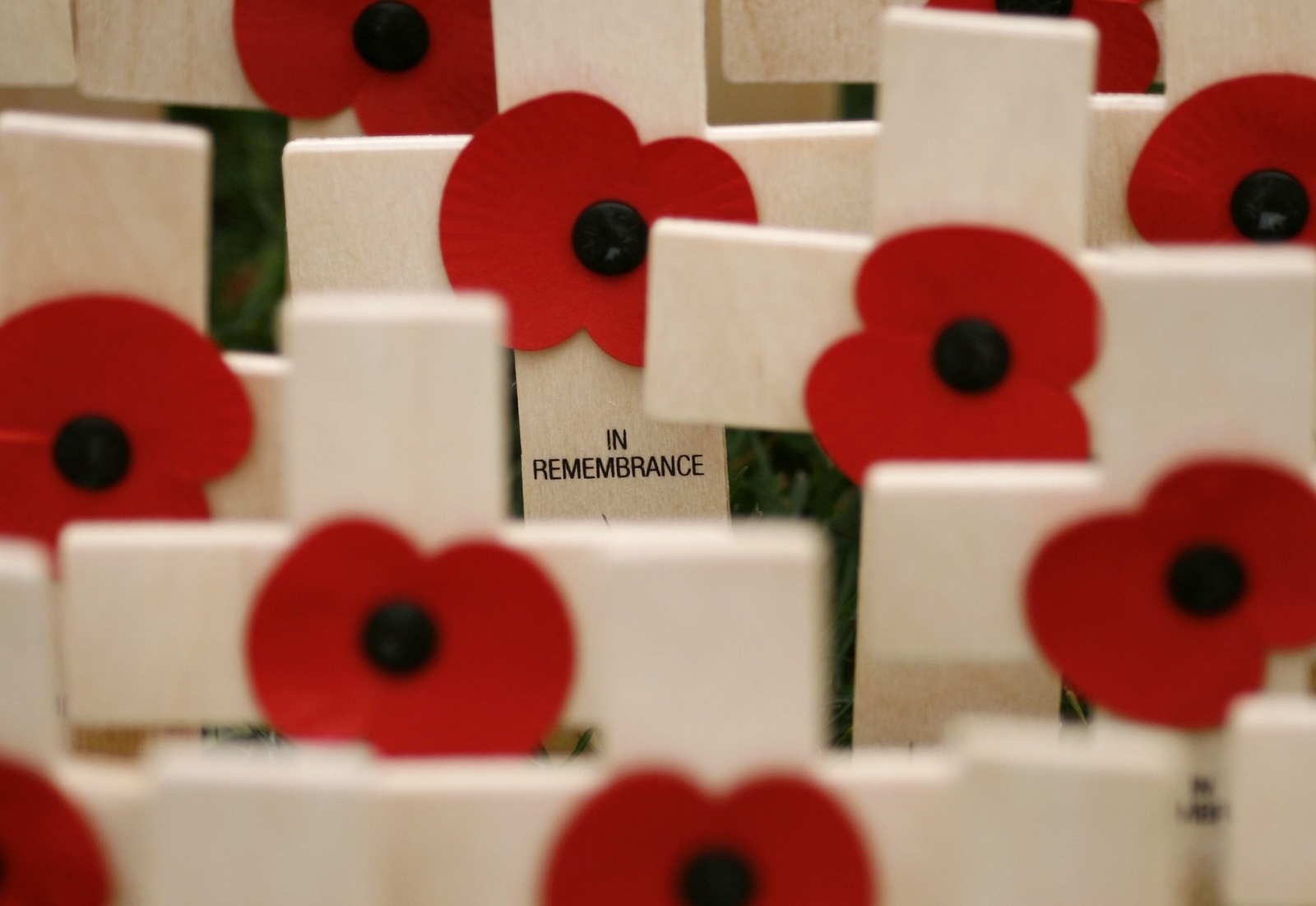 Crosses and remembrance day poppies
