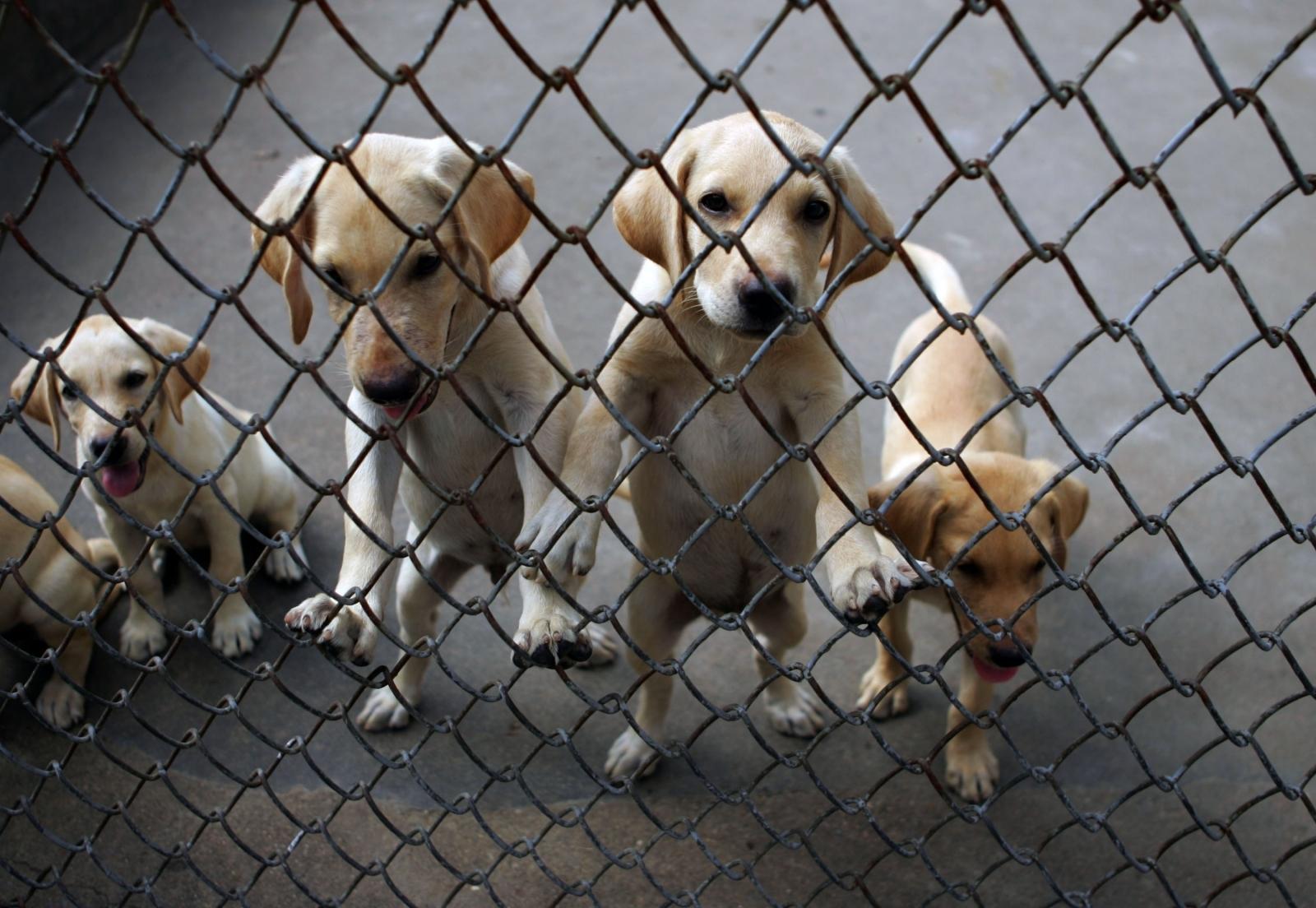 smuggled puppies