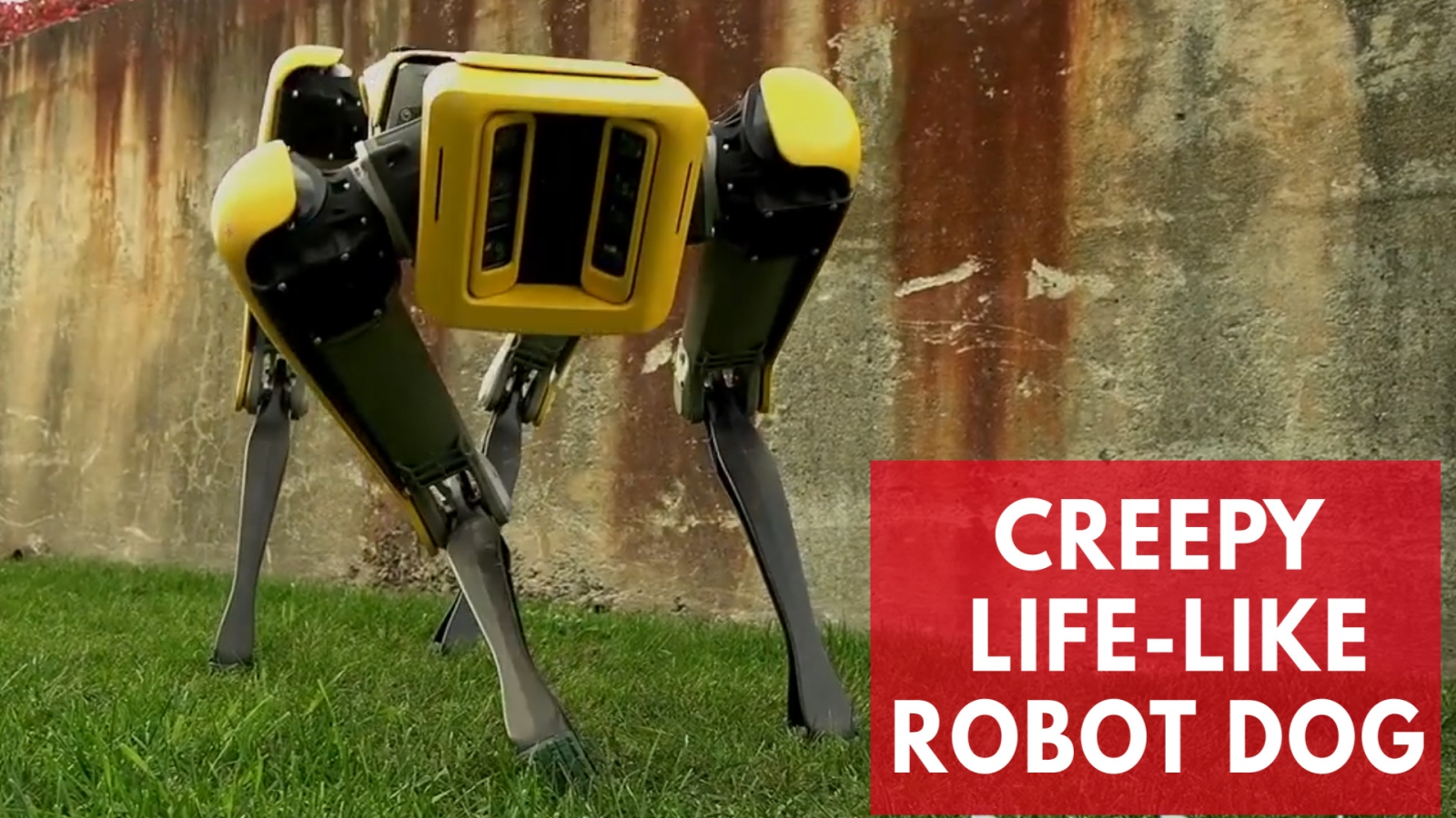 this-new-robot-dog-from-boston-dynamics-is-creepily-lifelike