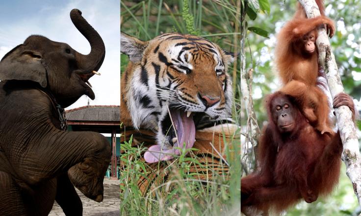 WWF Endangered Animals