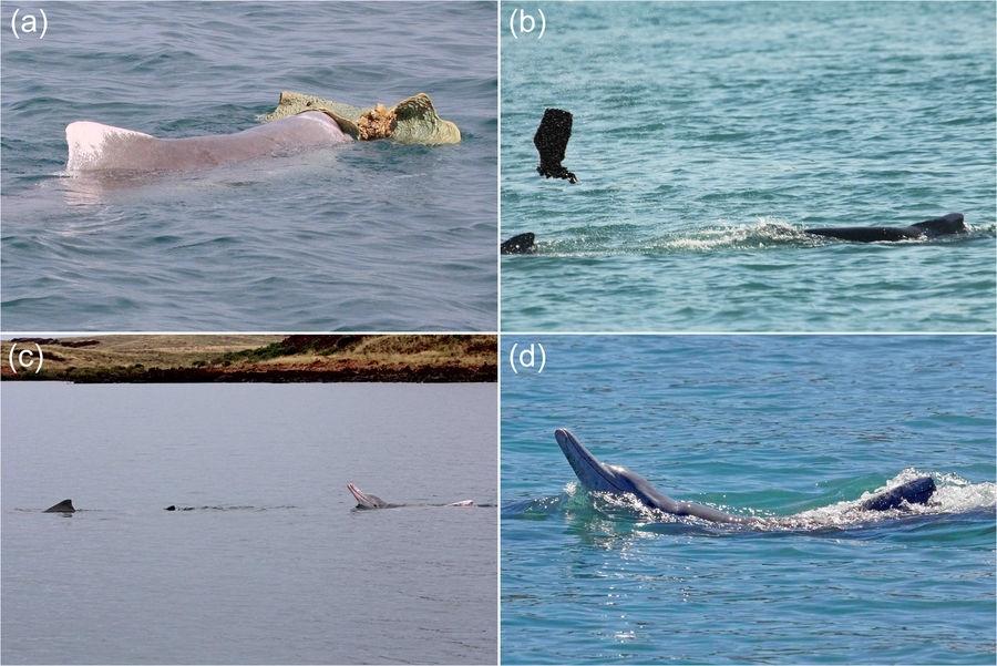 Dolphin mating behaviour
