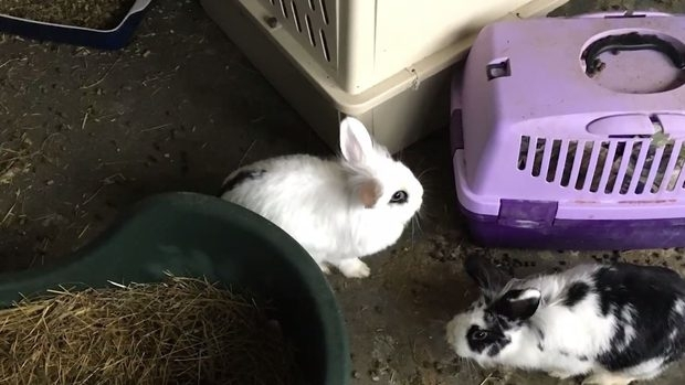 Neglected rabbits found in Danish apartment