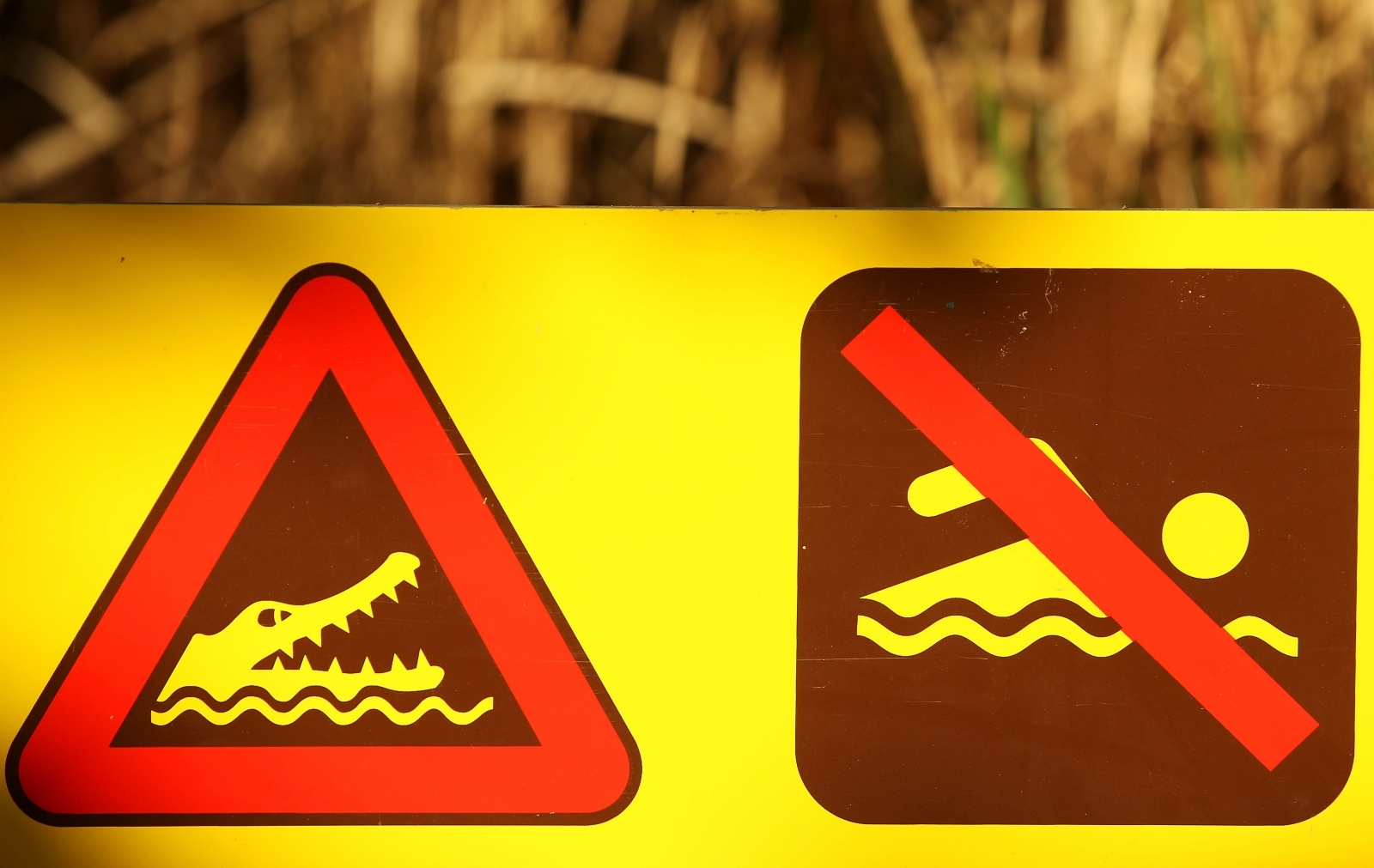 Crocodile swim signs