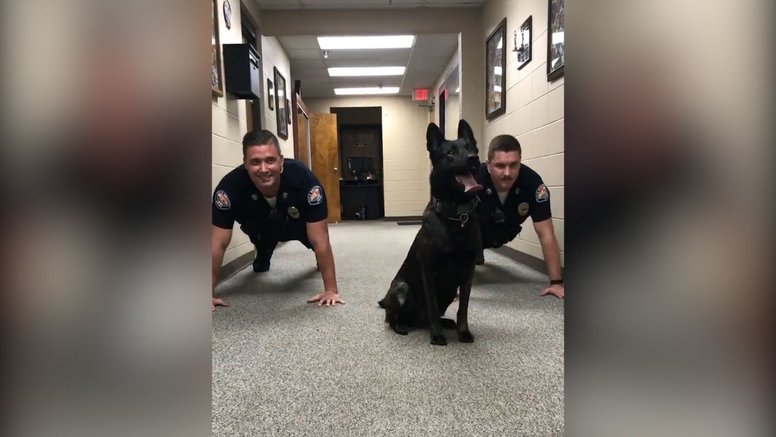 Adorable police dog does push-ups with officers as 'Eye of the Tiger' plays