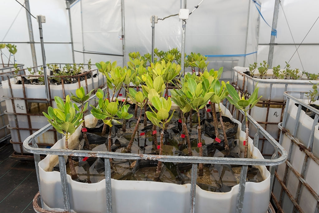 DARPA plant sensors