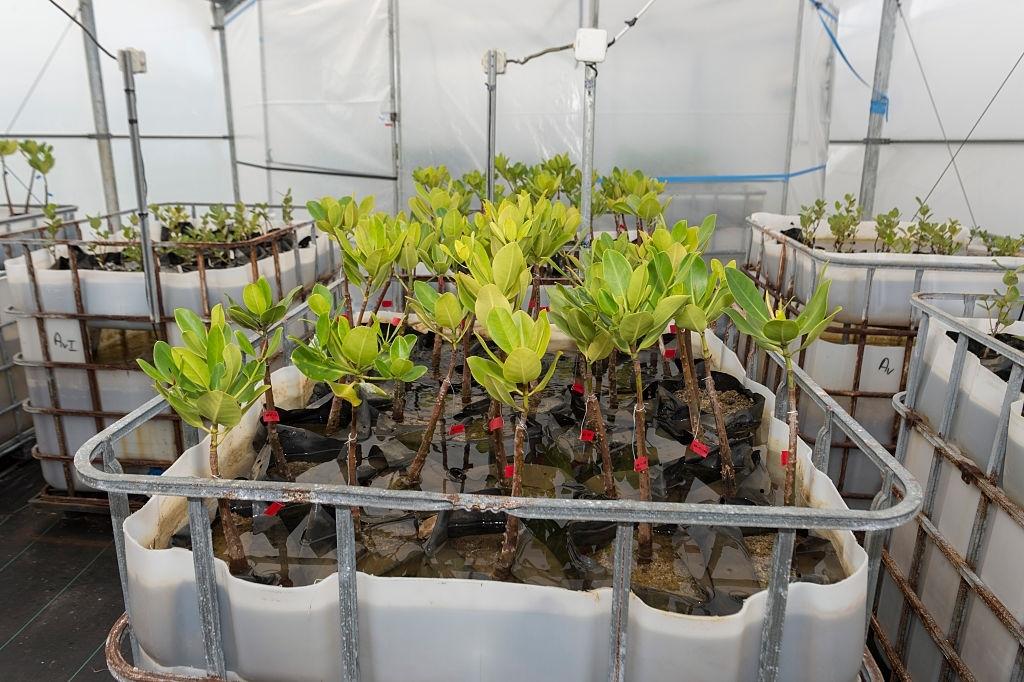 Darpa wants to turn plants into biohazard-detecting spy sensors