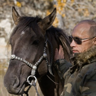 Vladimir Putin horse
