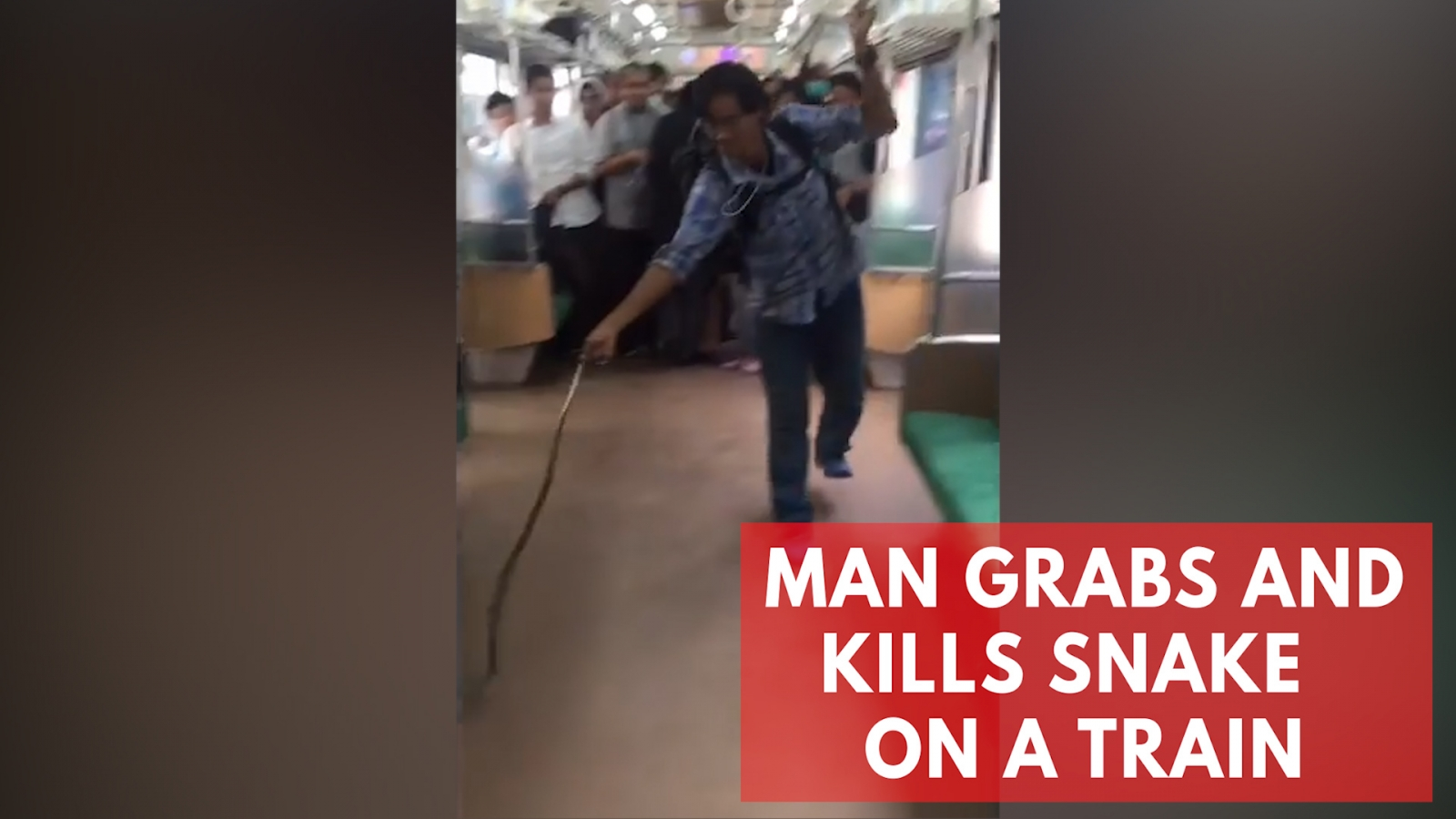 man-grabs-and-kills-snake-on-a-train-with-his-bare-hands